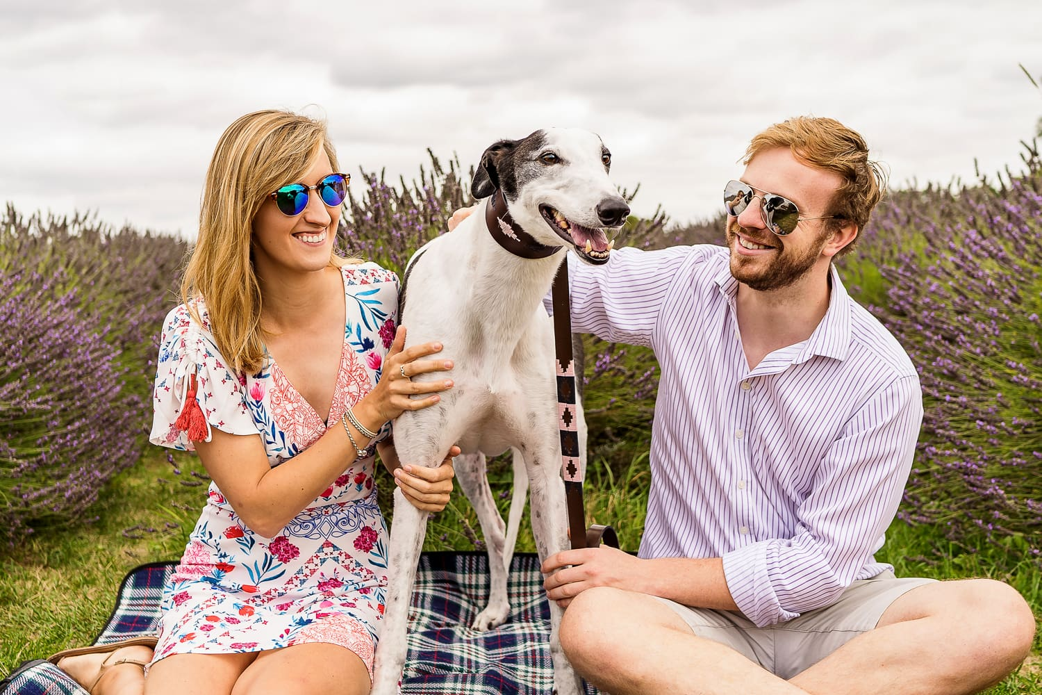 Couple sitting with their cute dog at Mayfield Lavender farm during their pre wed engagement shoot