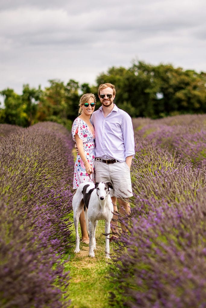 Lovers walking with their cool greyhound during their pre wed engagement shoot at Mayfield Lavender farm Surrey