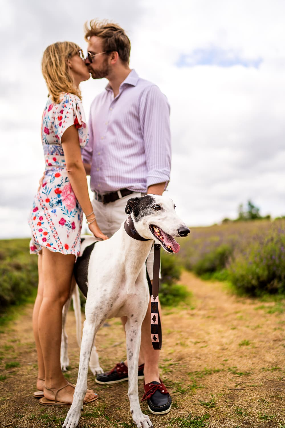 pre wed engagement shoot Couple standing with their great dog at Mayfield lavender farm Surrey